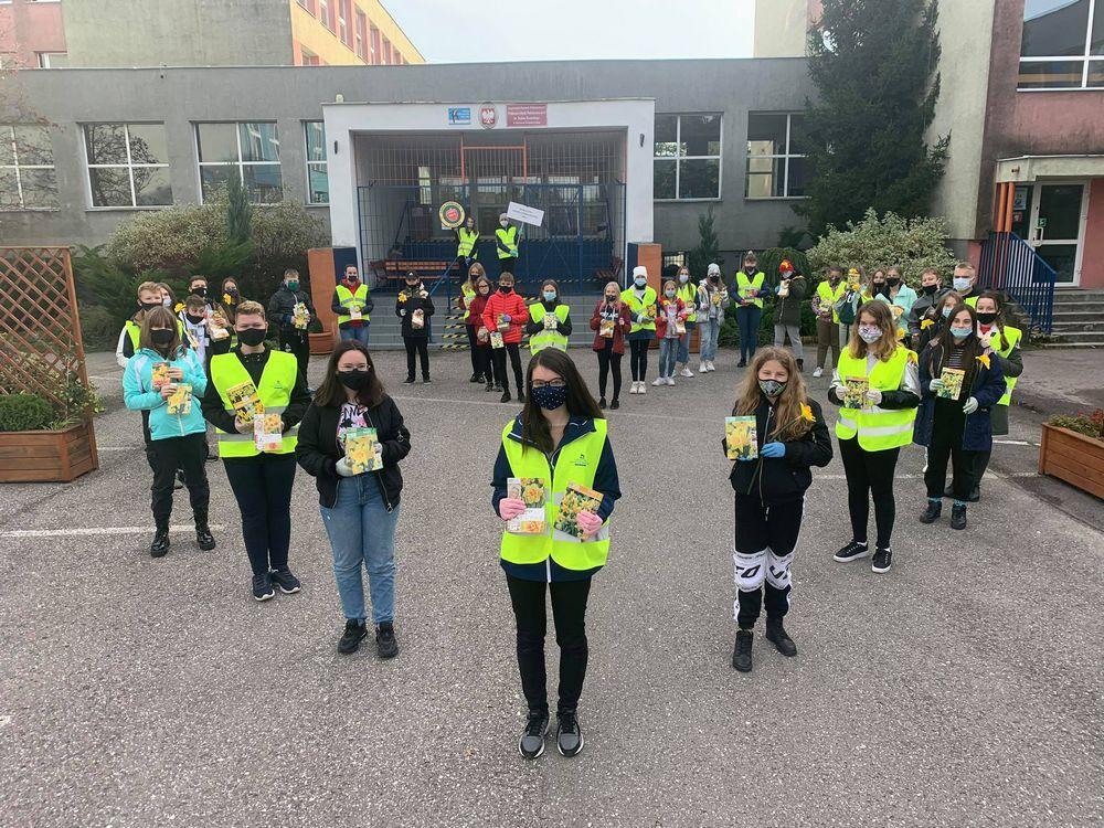 Wolontariusze kl. 7-8 sadzą żonkile koło szkoły